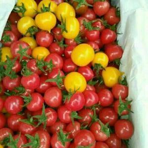 我市场处于山东聊城莘县,是鲁西最大的瓜果蔬菜基地,圣女果...