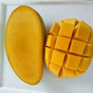 本人长期批发零售海南热带水果,现有大量芒果批发,代办也行...