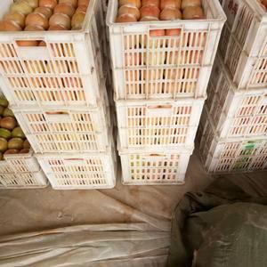 河南滑县大量供应西红柿和圣女果,货源充足,可提供全国各地...