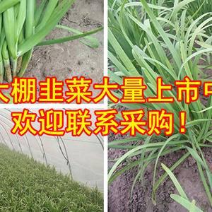大家新年好,本人在浦东新区种植有面亩韭菜,有需求的请联系...