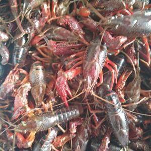 龙虾大量上市,规格齐全,需要联系18962196931