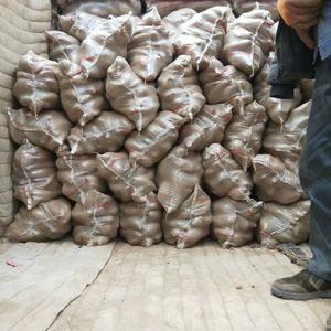 大量供应季薯26,苏八,烟薯等各种种薯