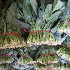 大量出售菠菜