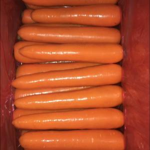 常年供应精品水洗胡萝卜,各种规格大小,各种包装,满足客户...
