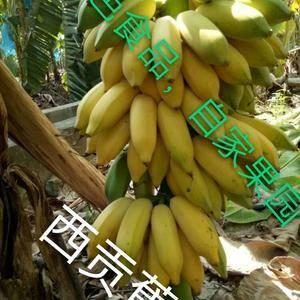 普通香蕉五斤装21 块……    九斤装26块, 牛焦...