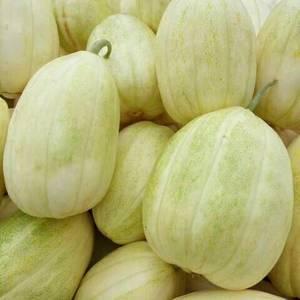 3月-7月大量香瓜,直根,嫁接都有,品种多,质量好,真诚...