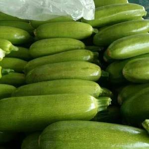 本市场主西葫芦,茄子,扁豆,西红柿,量大,求全国收购商前...