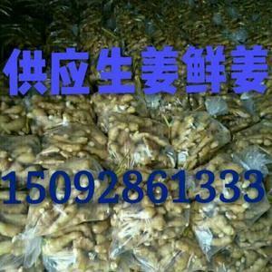 15092861333(微信同号)山东生姜大黄姜,面姜,...