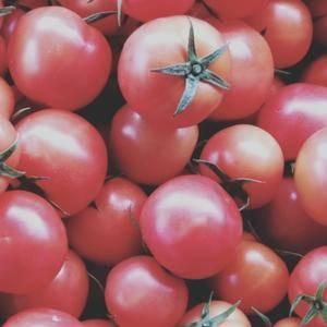 大量大红西红柿上市了  欢迎各地老板前来采购  联系电话...