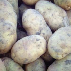自己种的土豆,品种有尤金885,河兰七,还有延八,延九,...