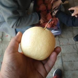 陕西酥梨大量供应中。有装好60头质量较好本人存有200万...