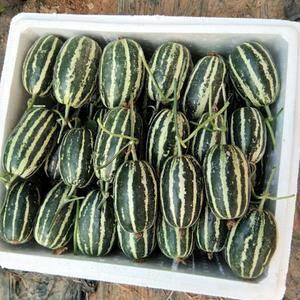 基地代收:甜瓜系列,香瓜系列,网纹系列等15个品种水果瓜...