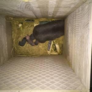 江苏晨晨竹鼠养殖场提供竹鼠种苗,商品竹鼠。提供技术