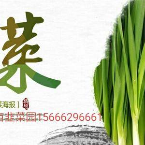 滨州市惠民县淄角镇前韩村种植韭菜有20多年的历史了。品种...