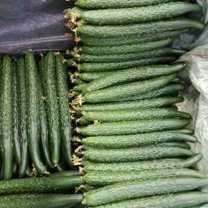 我处黄瓜一大量上市  色度油亮  把粗  条直  欢迎各...