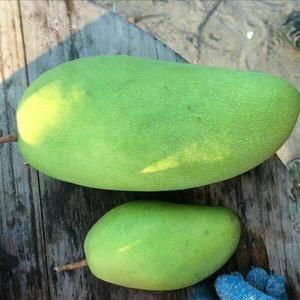芒果。大青芒越南水果