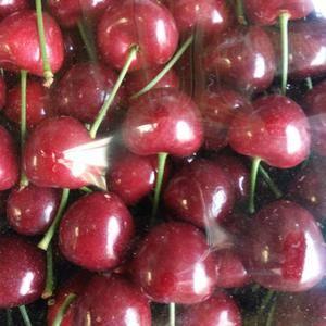 大连樱桃每年3-8月供应,品种齐全13072468666