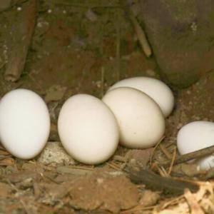 农家高山散养鸡蛋一件代发,包邮包售后30个只要58元