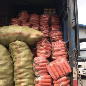 广西高质量精品胡萝卜,适应全国各地市场,条形均匀,颜色鲜...