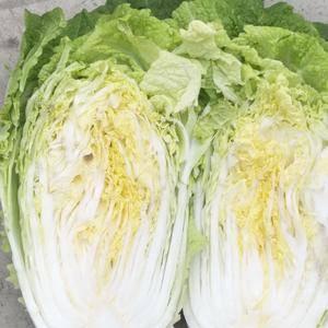 山东临沂兰陵县黄心大白菜大量上市,有需要的联系