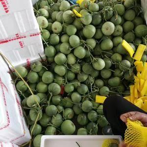 各种香瓜甜瓜已大量上市,有要货的老板们请极时与我联系,本...
