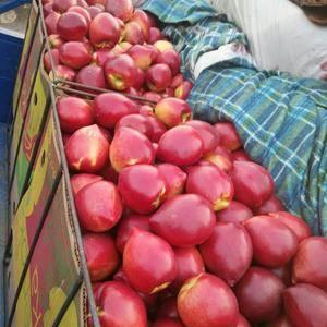 新鲜油桃,毛桃,大量上市,18863901102,货源充...