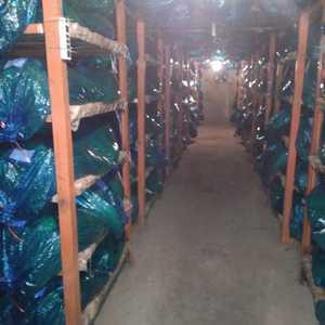 金乡蒜苔即将上市,欢迎来电提前预购冷藏。 大量供应代收...