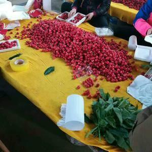 我处大稝樱桃大量上市,品种有红灯,先锋,美早,拉宾斯等各...
