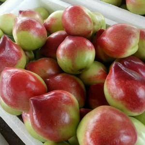 山东油桃大量批发市场18315751818.货源充足。价...