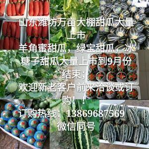 山东潍坊冰糖籽,羊角蜜,博洋九,绿宝等各种甜瓜大量上市,...