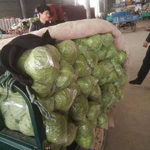 河北省邯郸市永年区甘蓝大量上市中价格低质量好有需要的朋友...