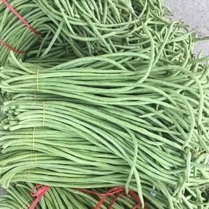 豇豆大量上市,货源充足,按客户要求分拣包装。