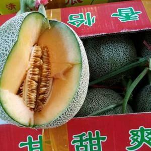 东方蜜甜瓜各种甜瓜哈密瓜 大量上市了 联系电话15106...