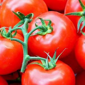 西红柿,黄瓜等蔬菜大量批发,零售 送货上门 质量保证 ...