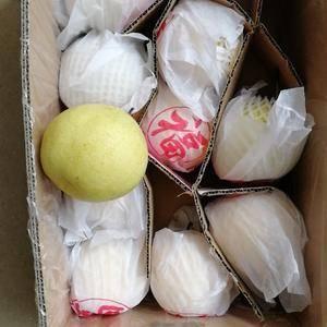 大量雪花梨出售价格便宜个大梨甜