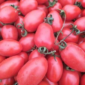 本地圣女果全年供应,一年四季不断货,货发全国各地水果批发...