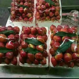 山东大棚油桃大量批发,价格便宜货源充足,颜色鲜艳口感脆甜...