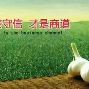 金乡蒜薹即将大量上市,今年预计价格不会高,欢迎前来洽谈业...