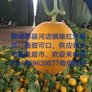 山东莘县洋香瓜上市了,香而甜,金黄色,市场及超市专供!