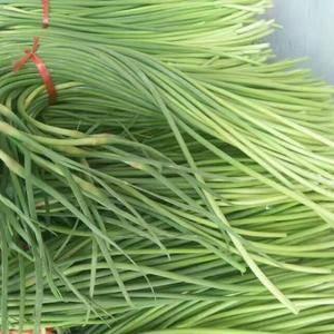 金乡太空蒜苔四月下旬大量上市,有想储存和发市场的朋友请与...