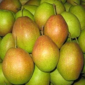陕西红香酥梨价格,香梨批发,库尔勒香梨价格,产地批发。1...