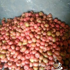 西红柿大量上市了,13699901316微同号