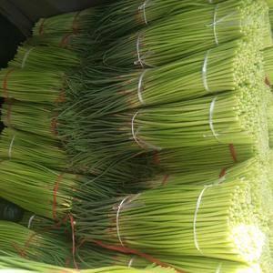 开封市通许县的蒜苔大量上市了,欢迎下单对订购。