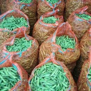 今年雨水充足,产地豌豆长势相当不错,相对往年比较好。豌豆...
