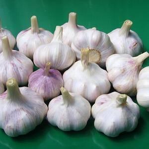 紫皮大蒜,蒜薹,马上大量上市,口感正宗,有需要的随时联系...