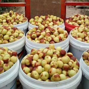 我合作社位于陕西省大荔县范家镇最大冬枣交易市场,涉及6个...