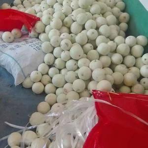 陕西甜瓜大量上市有需要的联系15029433533