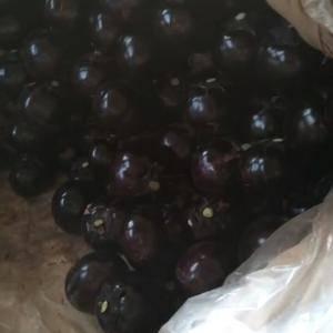 茄子大量供应中,质量好价格便宜。要的客户联系我。☎188...