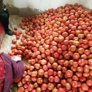 辣椒,西红柿上市啦,欢迎新老客户前来选购。