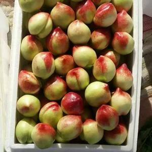 -山东大棚油桃主产地供应油桃,品种齐全,硬度好,口感脆甜...